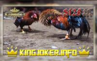 Adu Ayam Terbesar Di Situs S128, Arenanya Para Pemain!