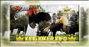 Agen Judi Sv388 Sabung Ayam Dan Bonus Terbaru, Tahun Ini!