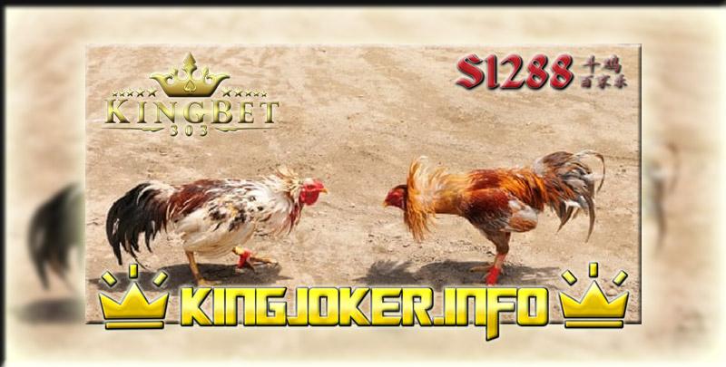 Nonton Live Di Situs Adu Ayam S1288, Pemain Main Di Sini!