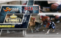Agen S1288 Adu Ayam Terbaik Di Asia Pasti Seru Bertaruh!