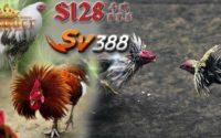 Situs Adu Ayam
